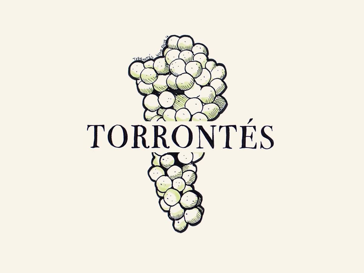 Torrontes wine grapes illustration - Wine Folly