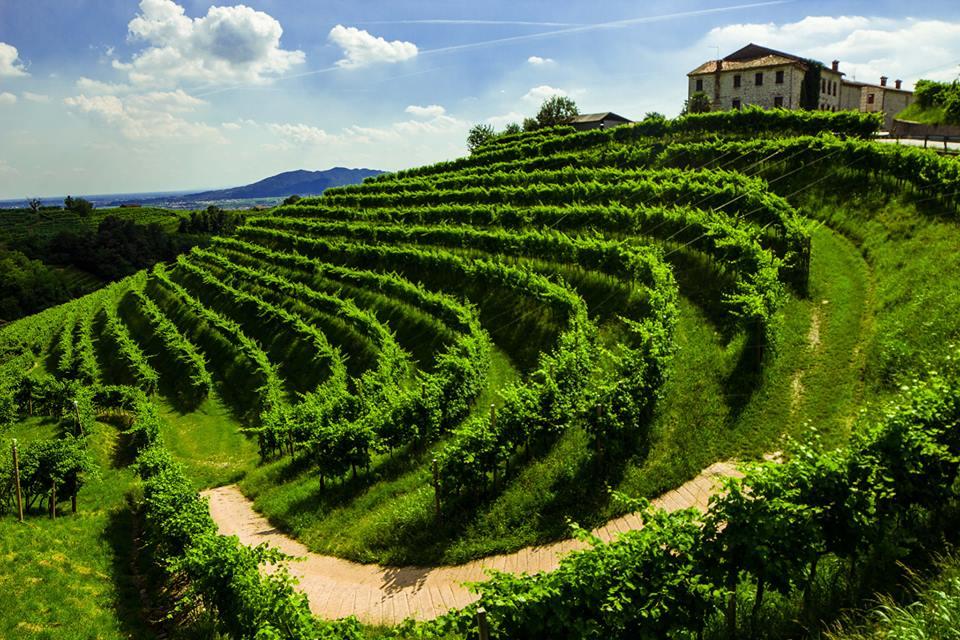 valdobbiadene-prosecco-hills-italy-elena-zamprogno