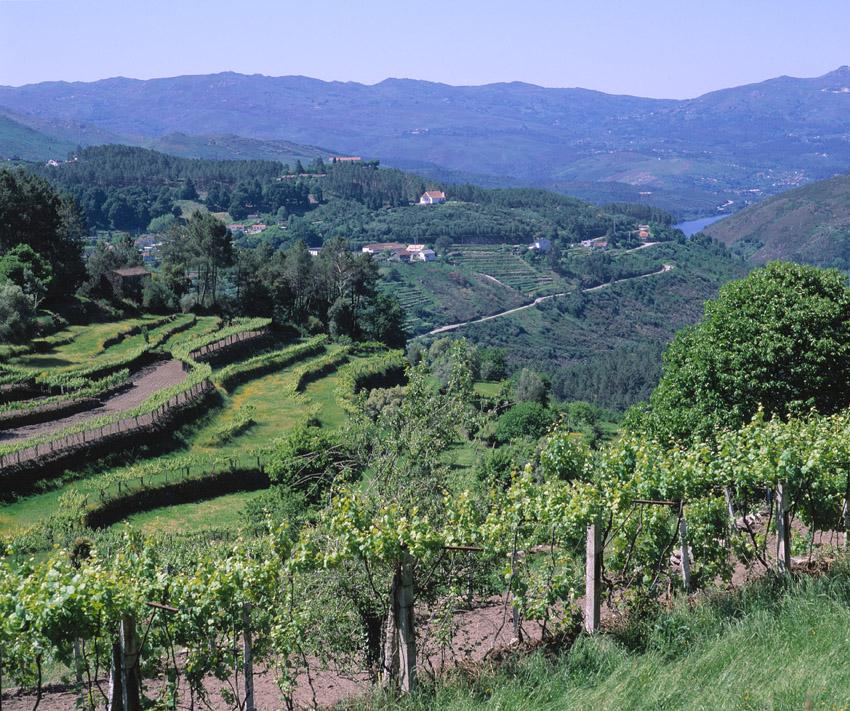Albarino vinho verde Vineyards-Soajo-region-Lima river-Joao Paulo