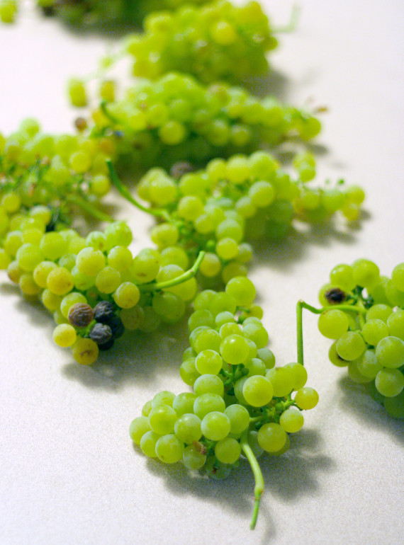 Viognier-grapes-by-Greg-hirson