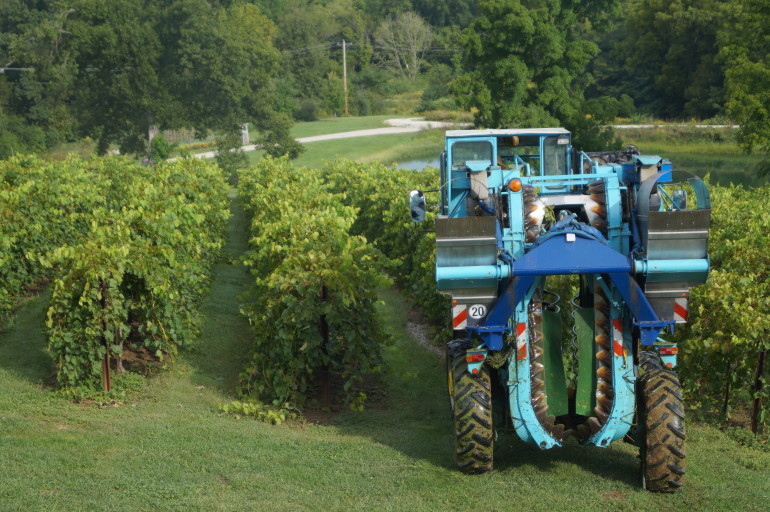 Wine Grape Mechnical Harvester in Hermann Missouri 2014 Harvest