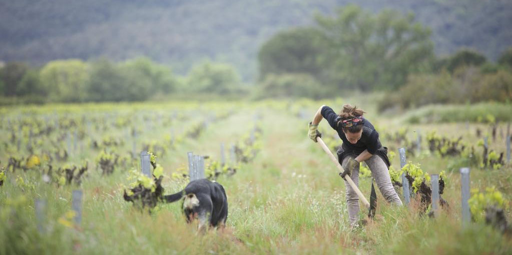 A woman and a dog working the vineyards in Wine Calling