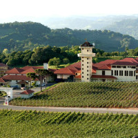 Wines of Brazil Vineyards Serra Gaúcha