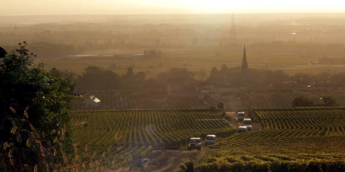 A vineyard in Burgundy.