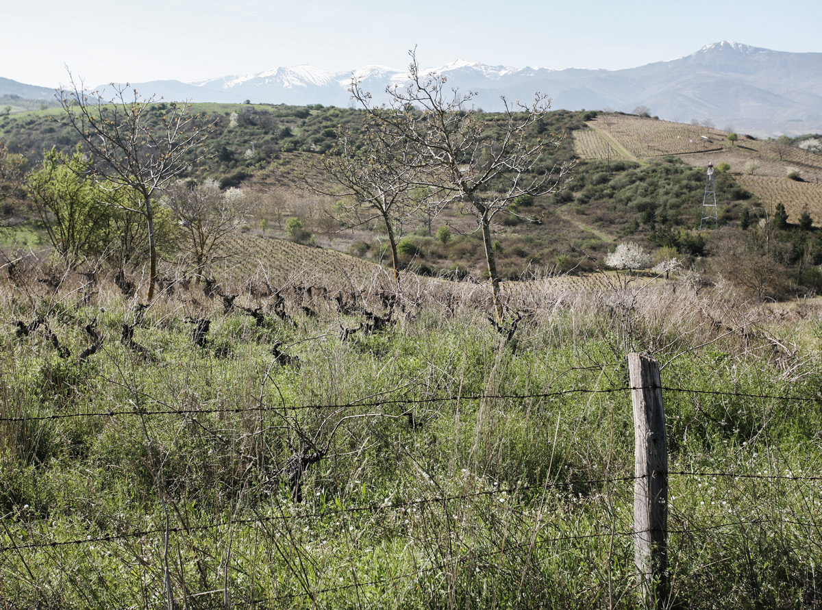 abandoned-vineyards-camino-santiago
