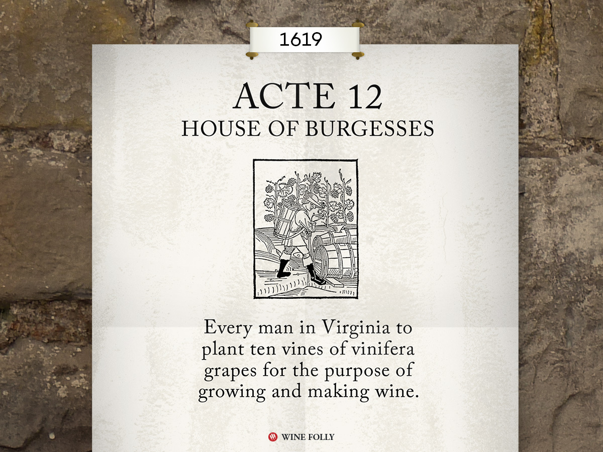 Acte 12 of 1619 required that all household men plant 10 vines to make wine in Virginia