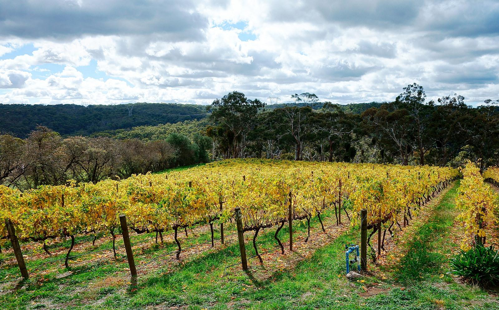 adelaide-hills-australia-vineyard-stebbing