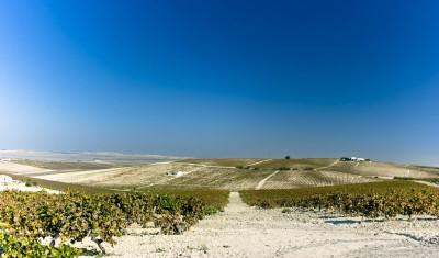 Albariza soil in sherry country Spain
