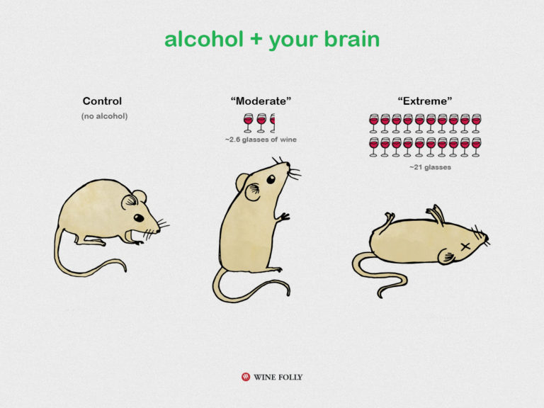 alcohol-and-your-brain-winefolly-mice-illustration
