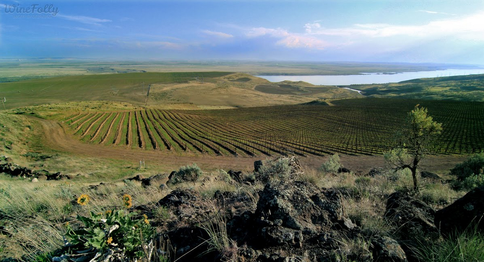 alder ridge vineyards horse heaven hills columbia river washington wine country
