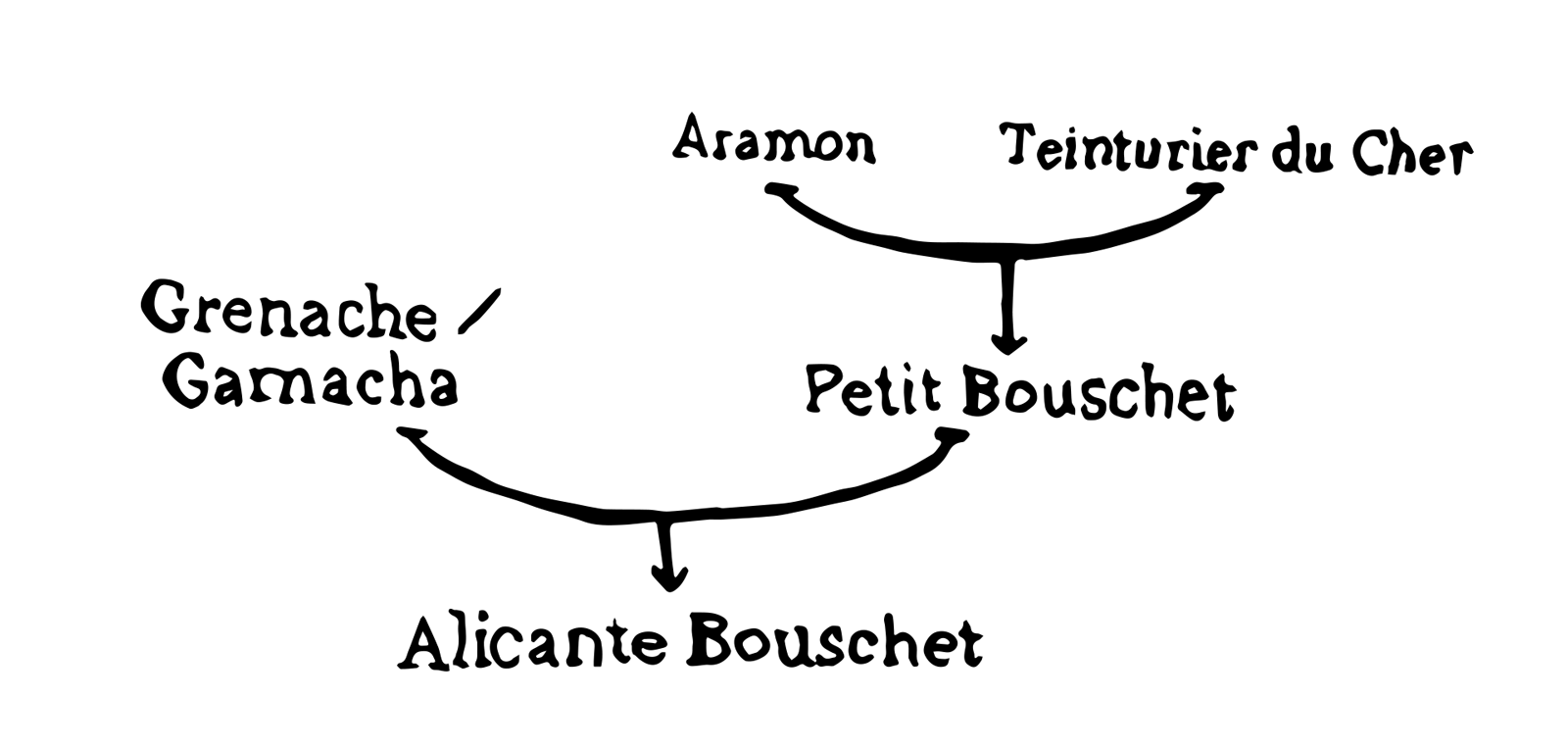 Alicante Bouschet Family tree illustration by Wine Folly