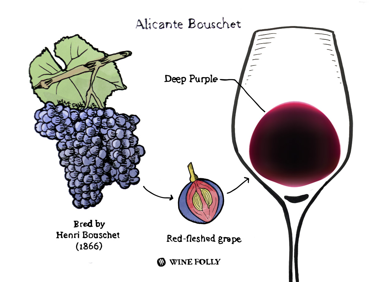 Alicante Bouschet grape bunch and color of wine illustration by Wine Folly