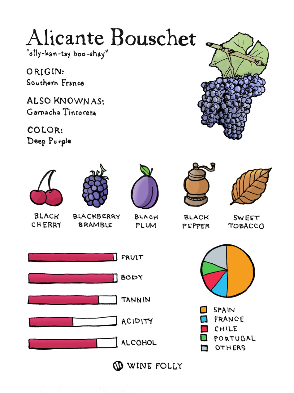 Alicante Bouschet grape profile illustration by Wine Folly