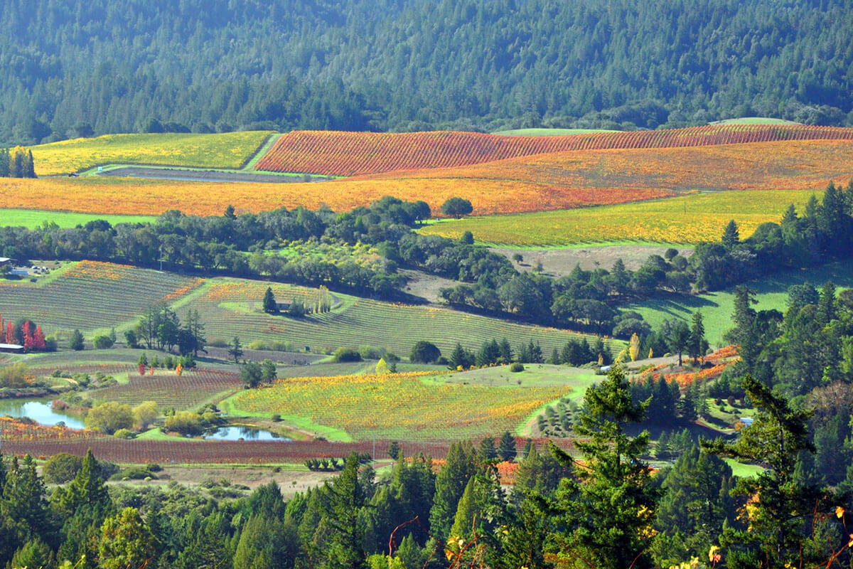 Vineyards in autumn at the Anderson Valley in California.