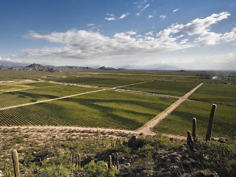 argentina-wine-country-vineyards