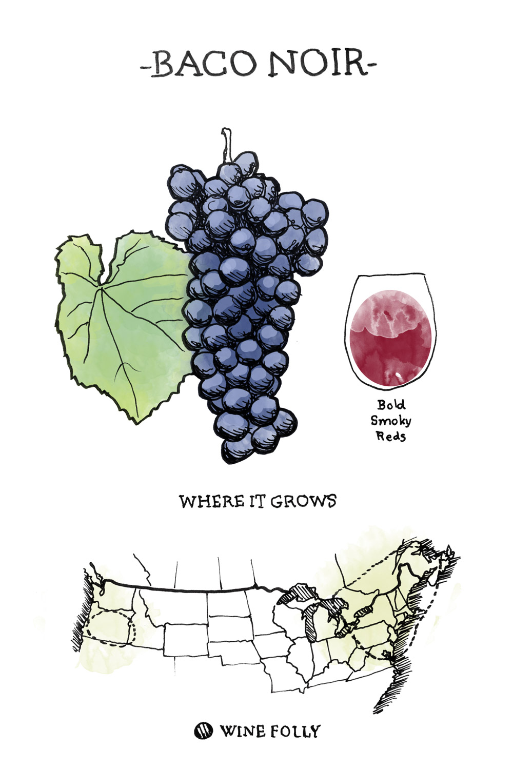 baco noir Wine Grape Illustration and Regional Map by Wine Folly