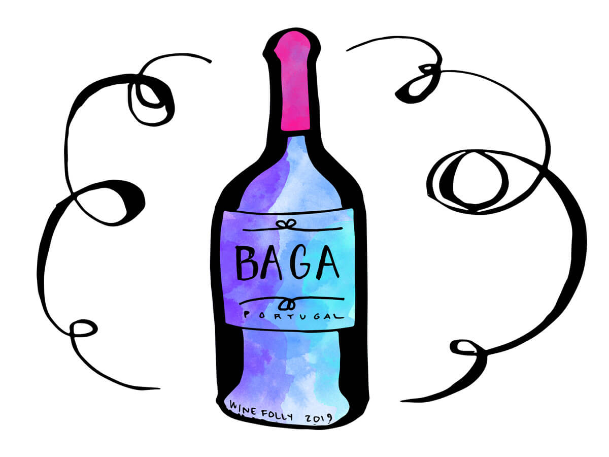 baga-portugal-red-wine-bottle-illustration-winefolly