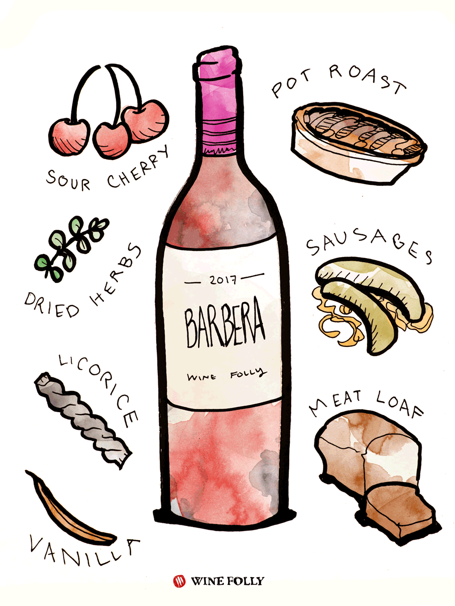 Barbera Red Wine Taste & Food Pairing Illustration by Wine Folly