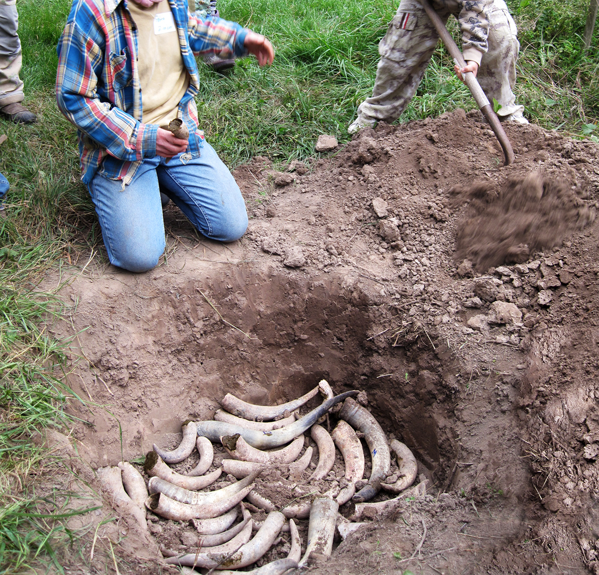 biodynamic-cow-horn-burying-compost-fall-preparation