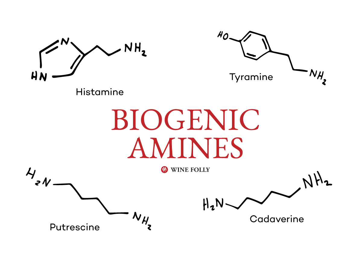biogenic-amines-chemical-compounds-graphic-winefolly