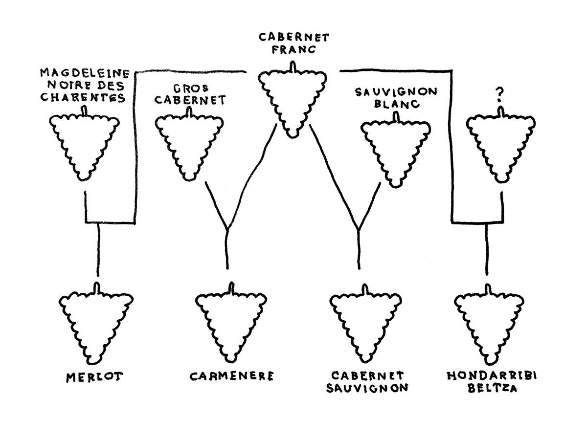 cabernet-sauvignon-family-tree