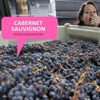 Eating Cabernet Sauvignon Grapes from Klipsum Vineyards at JM Cellars