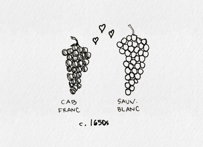 cabernet-sauvignon-is-made-1650s
