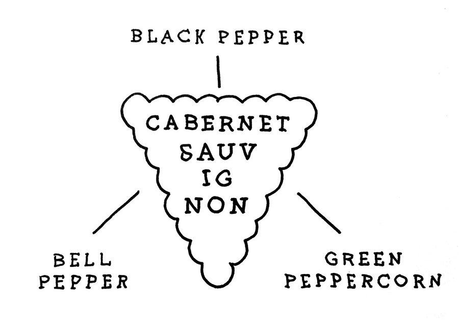 cabernet-sauvignon-pyrazine flavors illustration