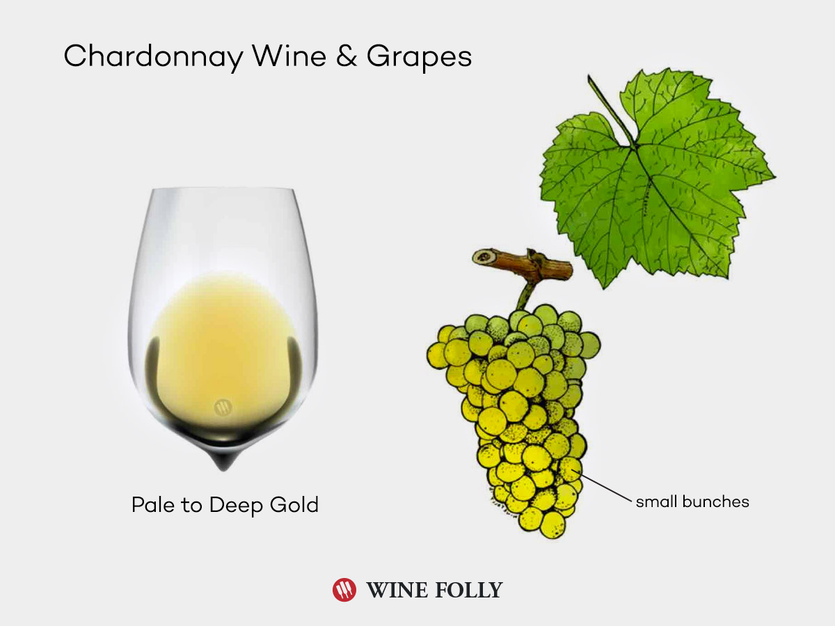 chardonnay-wine-grapes-illustration-winefolly