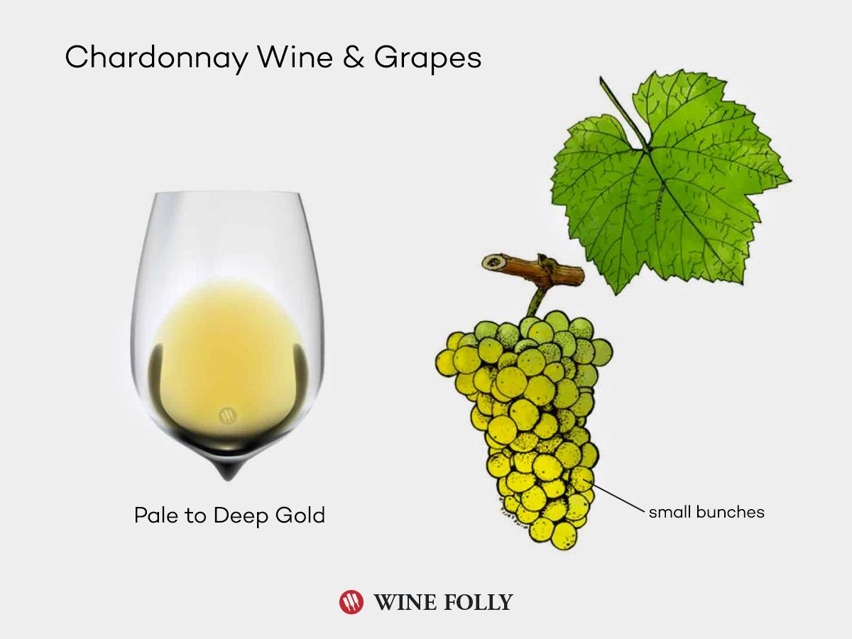 chardonnay-wine-grapes-illustration-winefolly