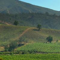 Casablanca Valley Chile Vineyards