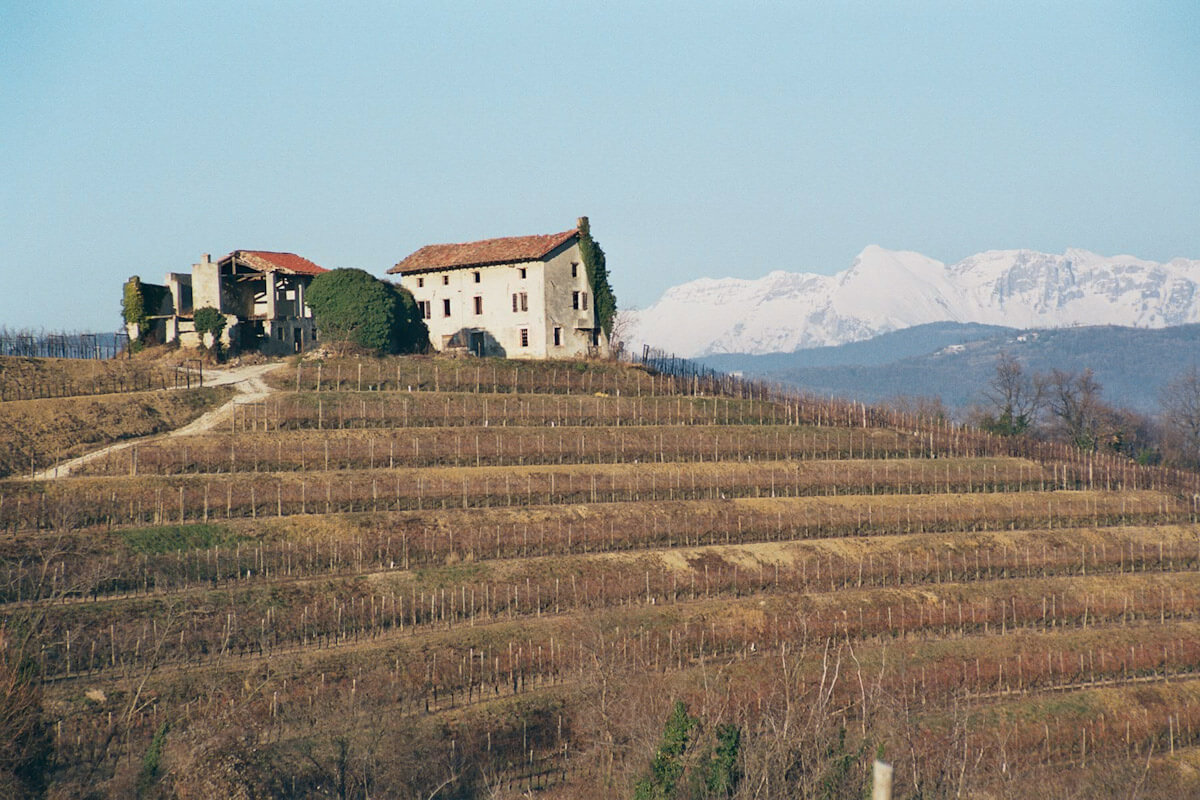 A Collio vineyard in winter by Harry Blue.