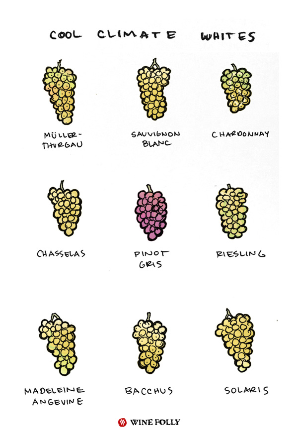 cool-climate-white-wines