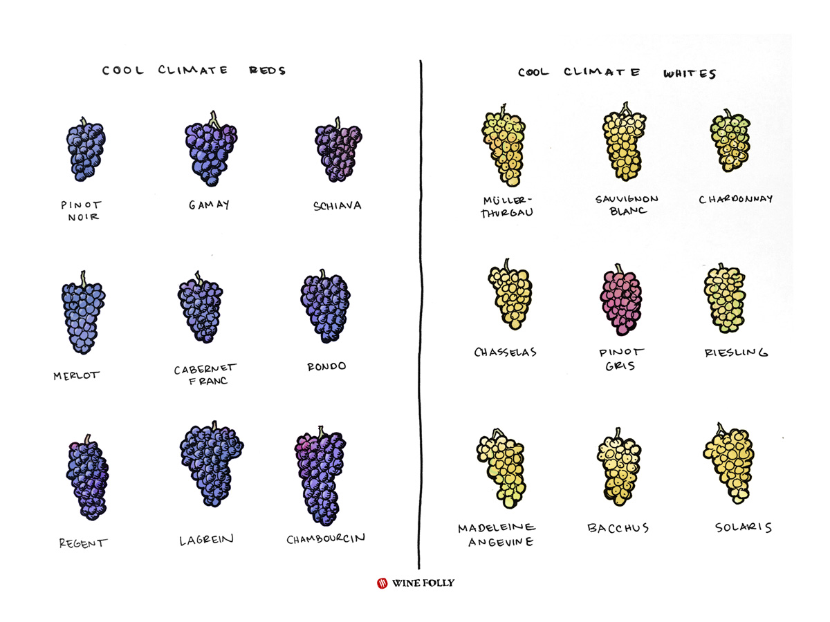 cool-climate-wines-grapes-winefolly