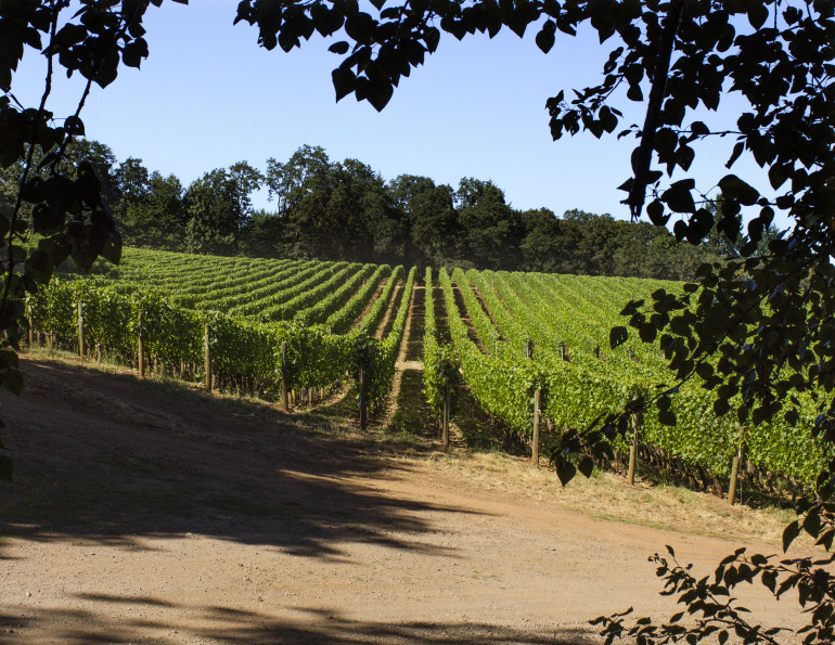 looking out at Cristom Vineyards Oregon Pinot Noir