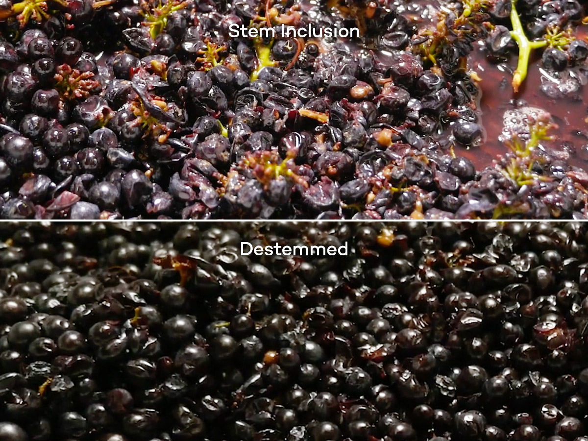 destemmed-versus-whole-cluster-stem-inclusion-winemaking