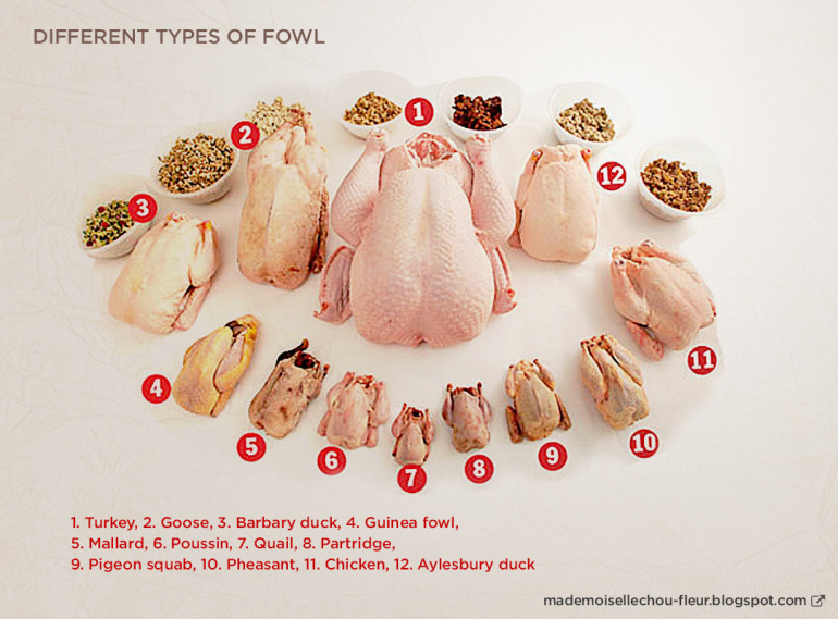 Different Types of Poultry Mlle Chou Fleur