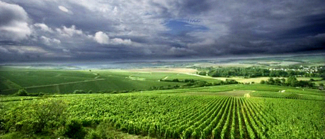 The original land of unoaked chardonnay; Chablis vineyards at Les Clos