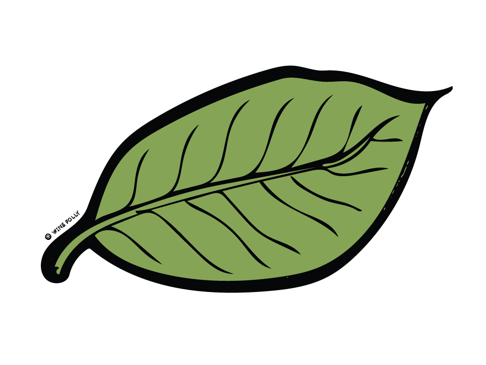 dried-green-leaf-illustration-winefolly