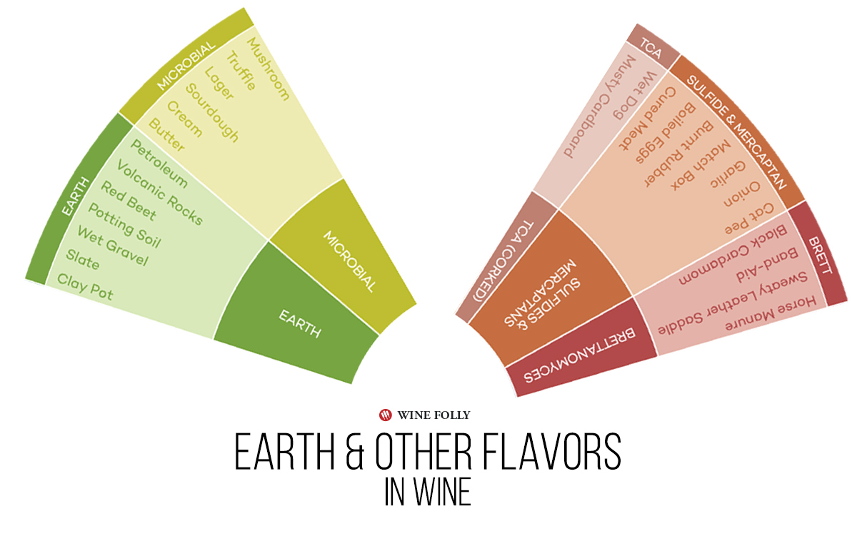 Earthy Mineral Yeast and Other Flavors in Wine - Infographic by Wine Folly.
