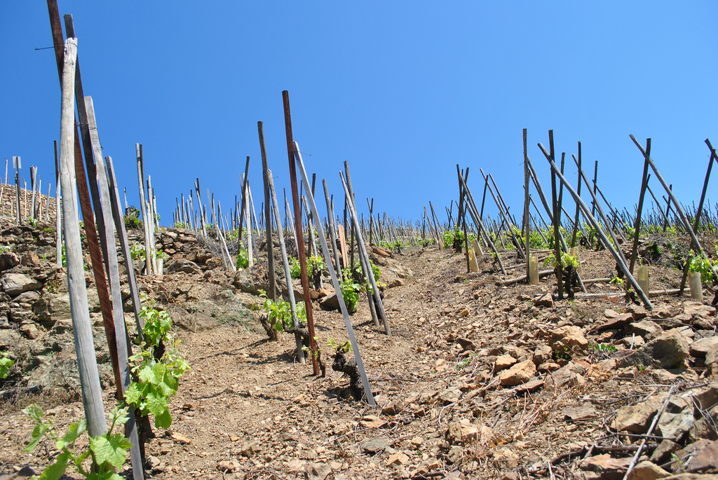 ed-clayton-cote-rotie-vineyard-soil-type