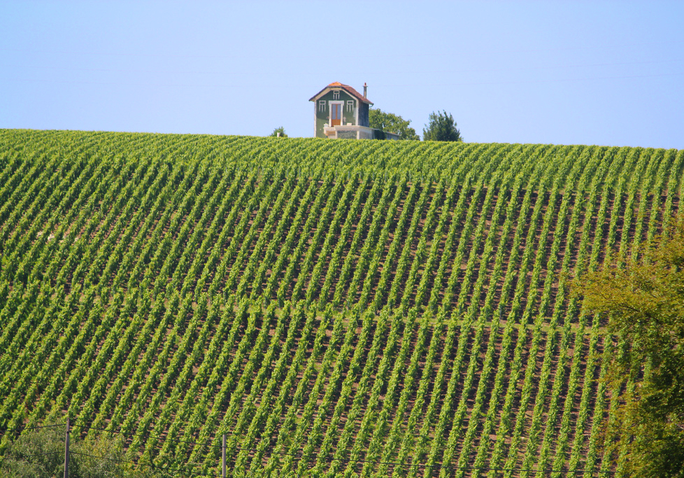 epernay-france-vineyards-champagne-rhodeson