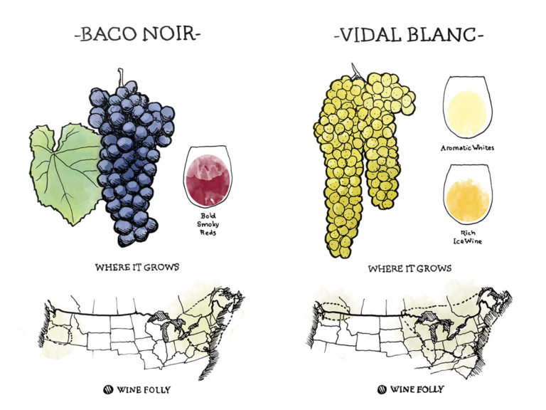 french-hybrid-wine-grapes