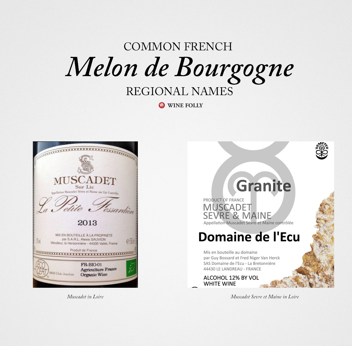 french-muscadet-white-wines