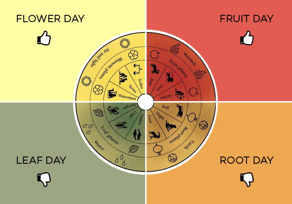 Fruit Day Root Day - Lunar Calendar and Wine Tasting - Wine Folly