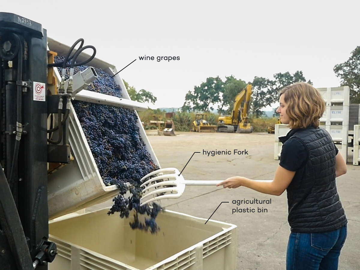 agricultural plastic bin with wine grapes and hygienic fork for wineries