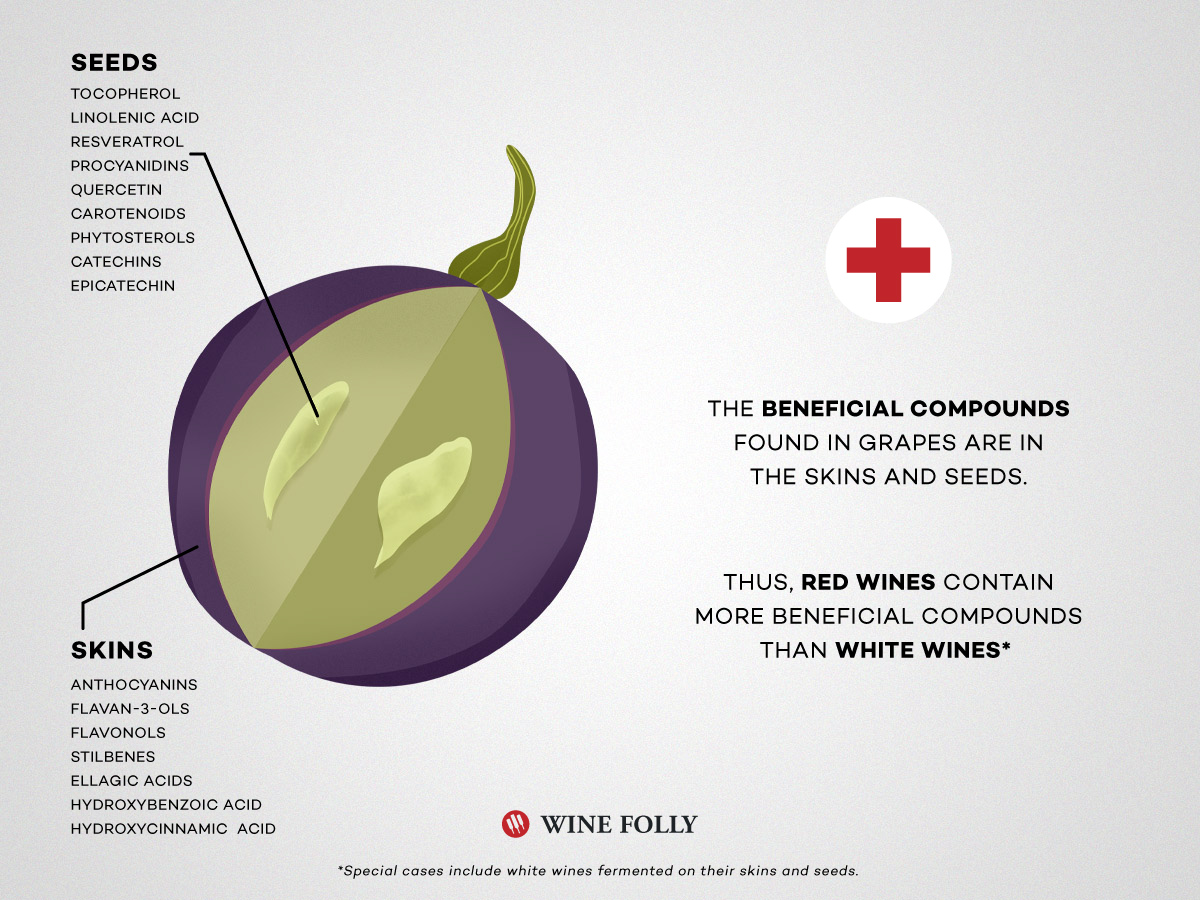 Wine grape cutaway with health benefits compounds listed by Wine Folly