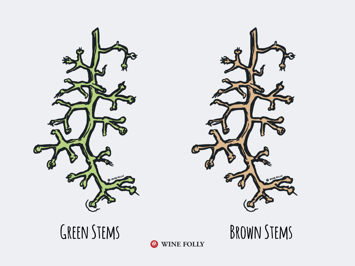green-stems-brown-stems-wine-folly