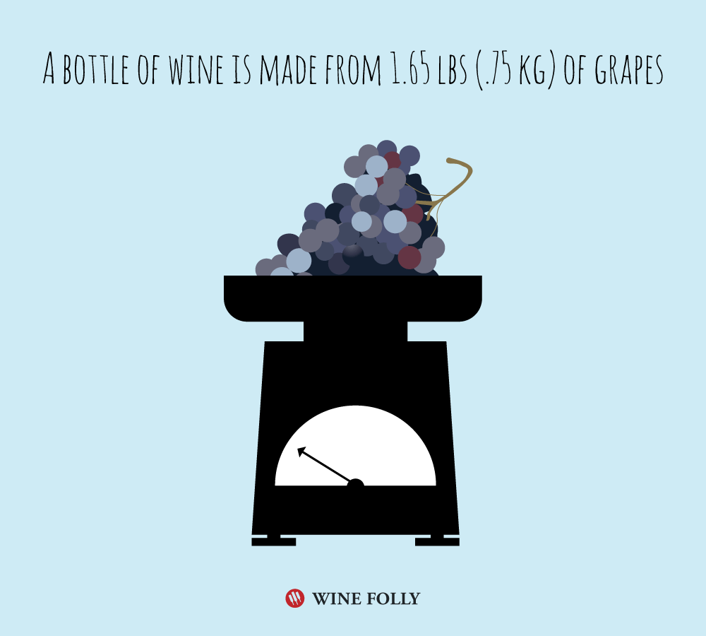 how-many-grapes-make-a-bottle-of-wine