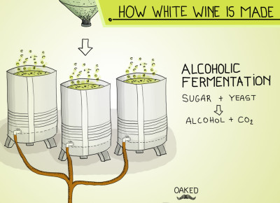how-to-make-white-wine